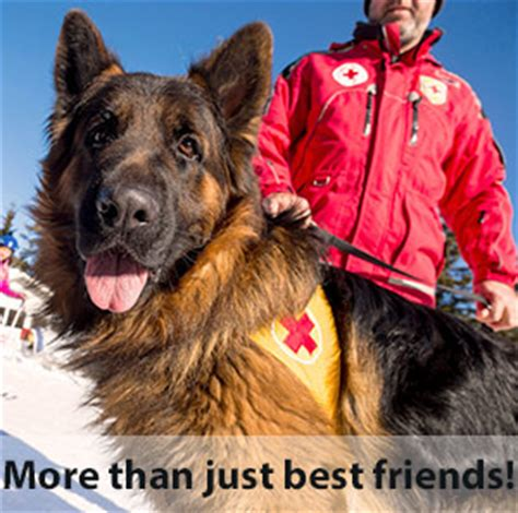 learn how to service dogs service certification usa service dogs