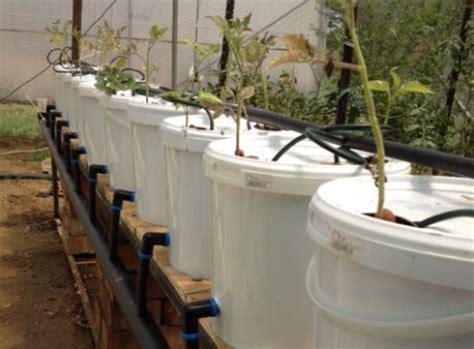 build  dutch bucket plant grow area