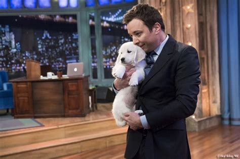 jimmy fallon puppies 324 best images about jimmy fallon on jimmy fallon family lip sync battle