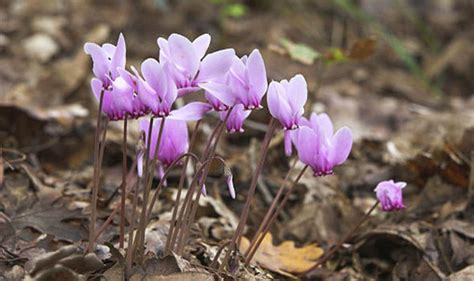 the top five bulbs to plant for an autumn garden flowering through september into october