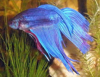 Aquarium by Fische