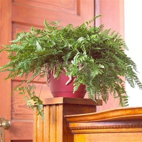 fern decor fern decor for room windows facing and interiors