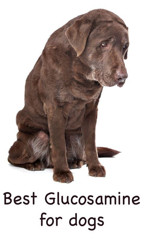 best glucosamine for dogs what is the best glucosamine for dogs and does it really work