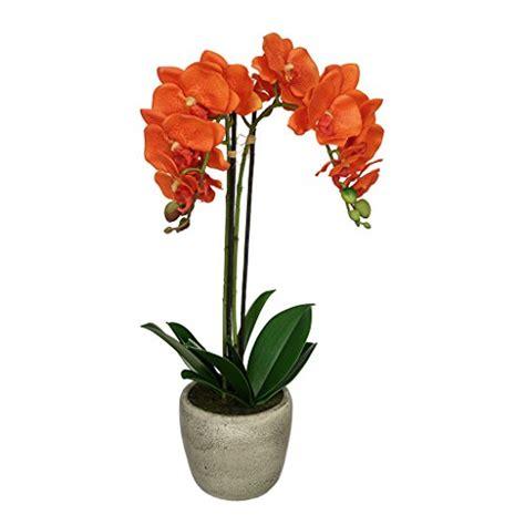 Orange Orchid  Ee  Amazon Ee   M