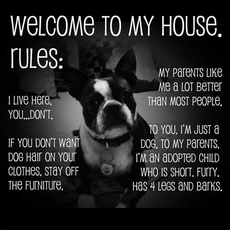 the dog house boston best 25 dog rules ideas on pinterest puppy quotes dog best friend quotes and pet