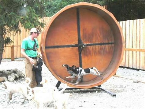 how are sled dogs trained dogs in their wheel picture of alaska sled dogs musher s c