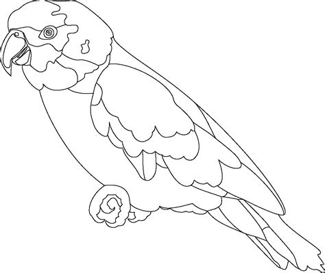 coloring page parrot free printable parrot coloring pages for