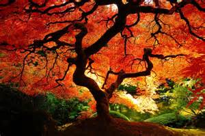 beautiful trees 15 beautiful trees