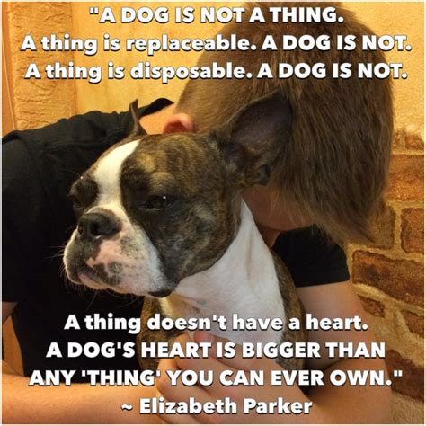 Boston Terrier Meme - 17 best images about boston terrier memes dogs and