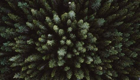 landscape drone aerial view forest wallpapers hd