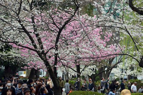 imagenes de japon en invierno 161 espectacular japoneses disfrutan de la primavera luego