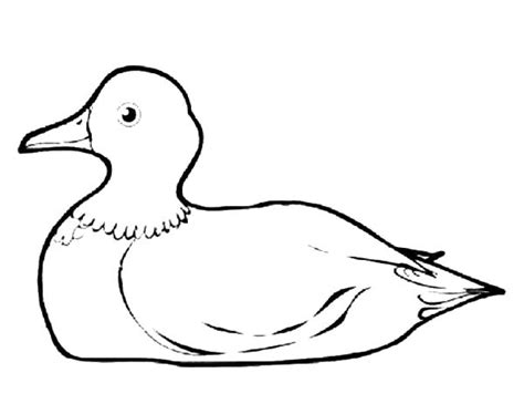 free coloring pages mallard duck sitting mallard duck coloring sheet coloring pages