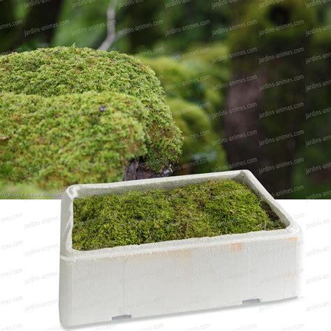Faire Pousser De La Mousse Vegetale faire pousser de la mousse vegetale daiit