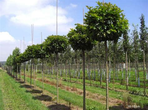 steinfußböden für küche kugelbaum kaufen g 195 188 nstige lieferung mr
