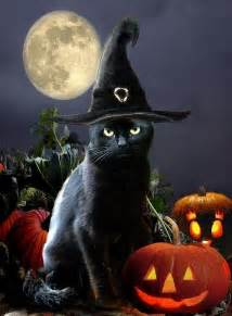 halloween black cats black cat witch witchy cats pinterest