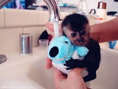 Monkey In Bathtub by Baby Monkey Adorable Gif Wifflegif