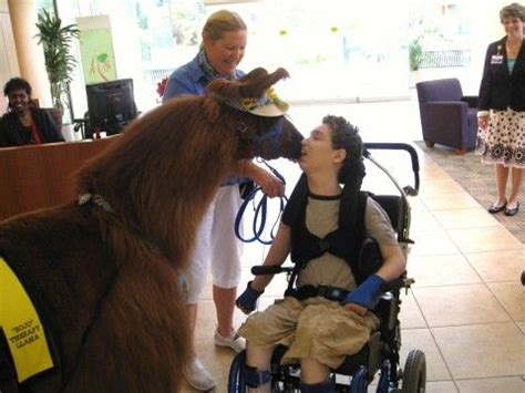 Providence Detox Portland Or by 8 Best Llama Alpaca Therapy Images On Llama