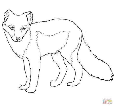 coloring page of arctic fox arctic fox summer coat coloring page free printable