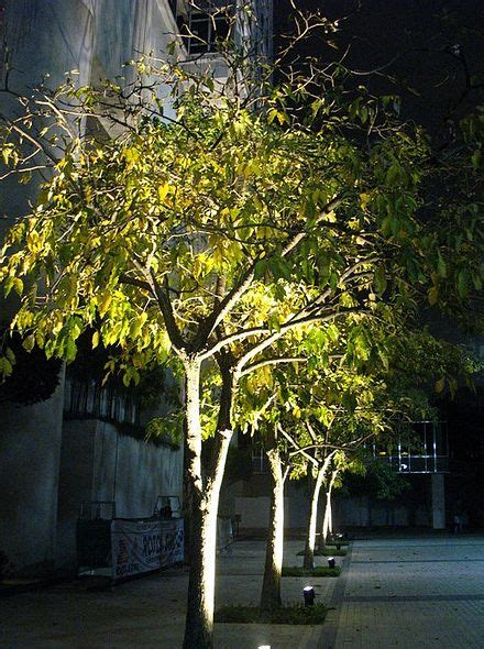 tree lightings 25 best ideas about outdoor tree lighting on