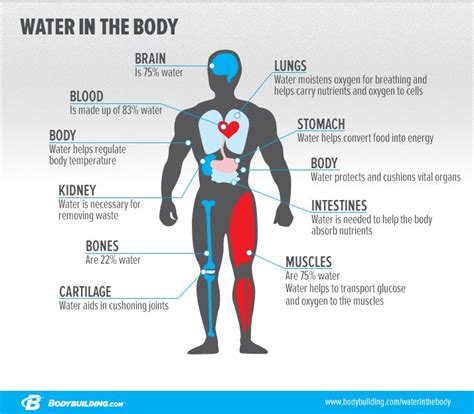 hydration needs for athletes everything you need to about hydration
