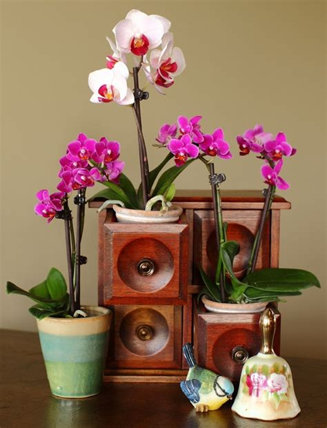 Houseplants That Don T Need Light by Growing Orchids Indoors How To Combine Orchids In The