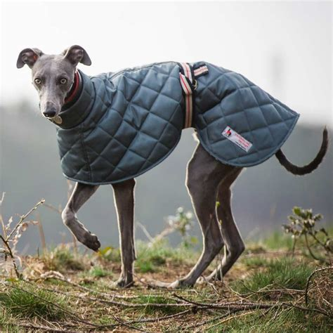 coats for dogs best greyhound coats coats for greyhounds