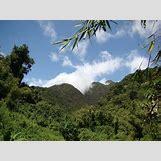Mountain Gorilla Habitat   1100 x 825 jpeg 149kB