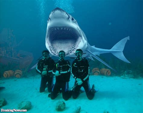dive shark shark diving pictures freaking news