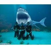 Shark Diving Pictures  Freaking News