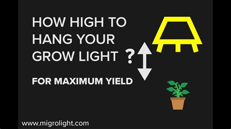 how high to hang a picture how far should grow lights be from plants learn how high to hang a grow light