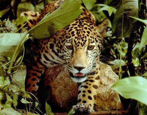 jungle animals bei 223 en gedanken rainforest