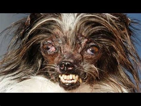 what is a mutt two year mutt peanut crowned world s ugliest