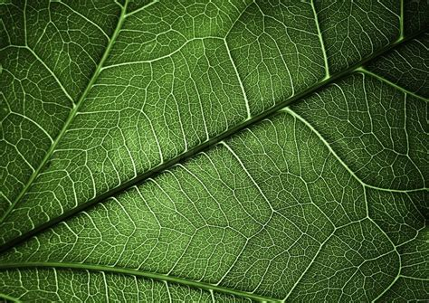 plant background green plant texture background for different uses stock