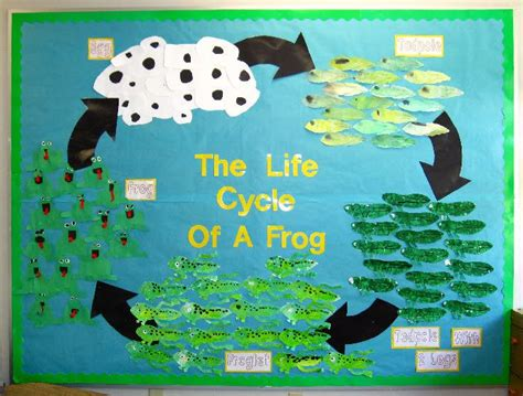 Life cycle craft and coloring page   Crafts and Worksheets