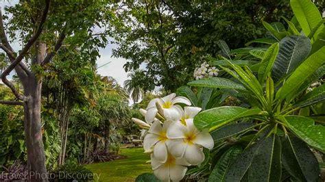botanic gardens miami miami botanical garden file miami botanical garden img