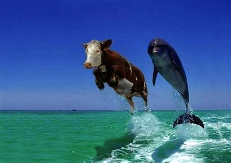 pontoon boat rental fernandina beach fl that dolphin looks photoshopped p holy cow pinterest