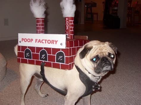 pug pooping factory costume costumes and