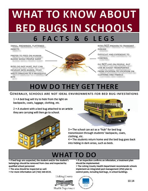 how to a to detect bed bugs bed bug furniture removal nyc the bed bug professional tag archive bed bug manhattan