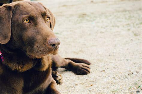 comfort dog registration topdoghealth com blog