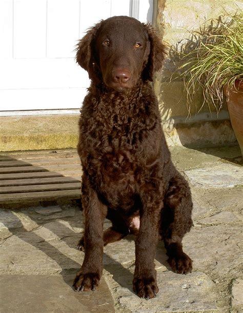 Black Dog - Habitat Aid's Blog