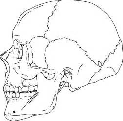Anatomy Skull Coloring Pages Image Mag