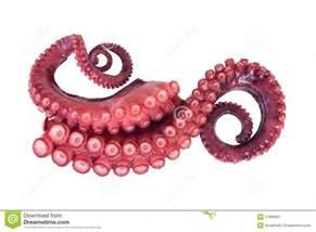 tentacules de poulpe image stock image 11966661