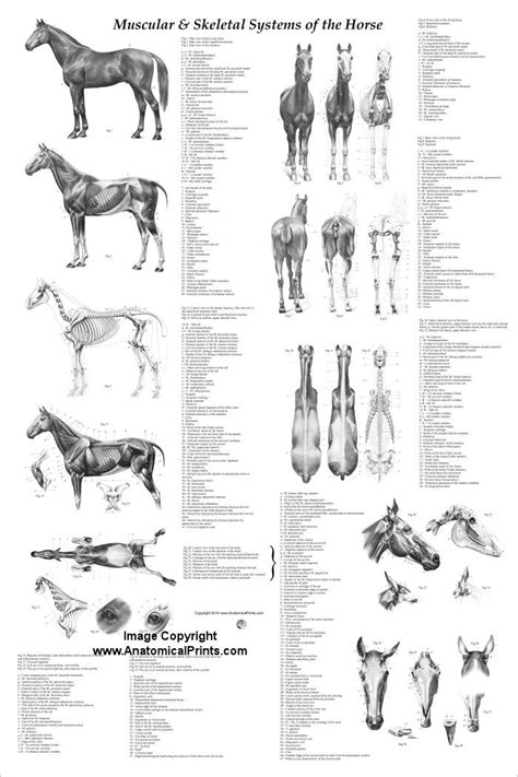 anatomy and physiology coloring workbook answers page 118 118 best animal drawing references images on