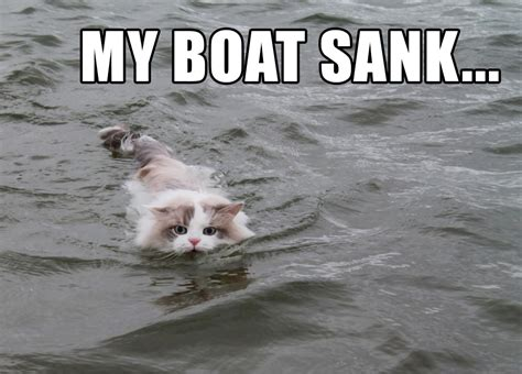 dog and boat puns cat takes its boat out while on catnip learning a valuable