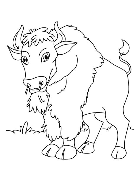 Free Printable Bison Coloring Pages For Kids Bison Coloring Page