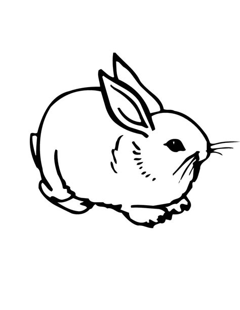bunny coloring page free printable rabbit coloring pages for