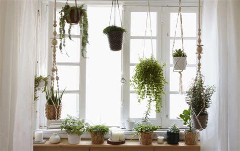 window gardens how to grow a window garden and create a macram 233 plant hanger