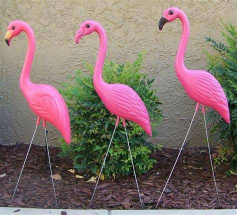plastic flamingos flamingos picture that and flamingo painting on pinterest