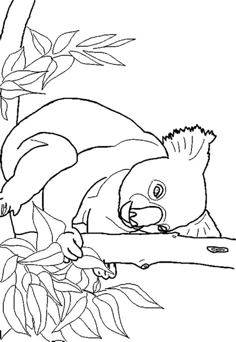 christmas koala coloring page christmas koala coloring pages christmas best free
