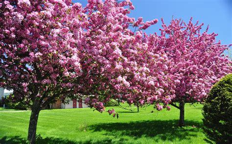 elegant flowering spring frees preparing outdoor area